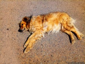 Nicol is sunbathing at Aparcament Camp De Futbol - Manlleu – Spain