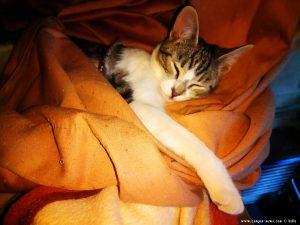 Shiva ist auch noch müde - Lingua Alessandro Autoriparazioni - Pianfei – Italy